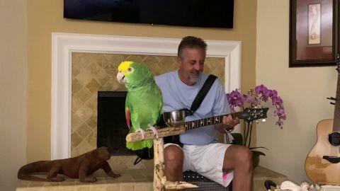 El loro que canta Led Zeppelin